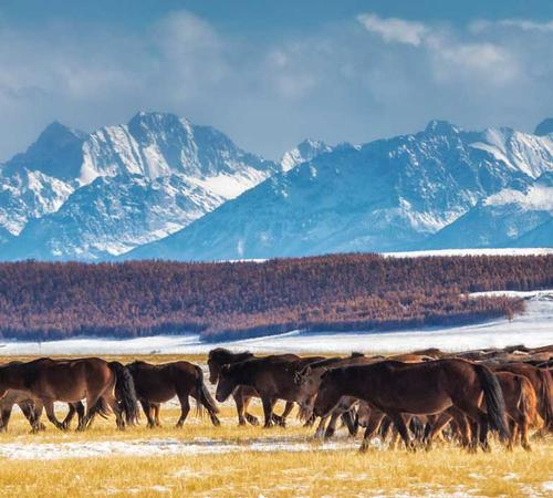 Beautiful Mongolian landscape